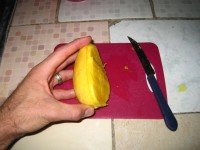 It's still (barely) mango season. Andrew might be addicted.